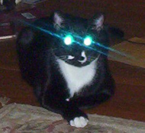 Goa'uld Kitty